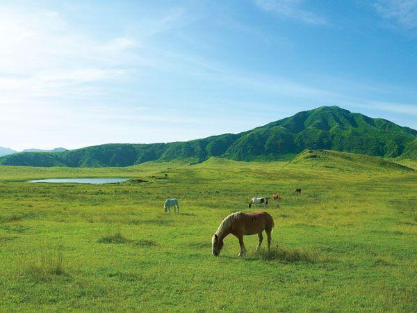 草千里ヶ浜 | 観光地 | 【公式】熊本県観光サイト もっと、もーっと ...